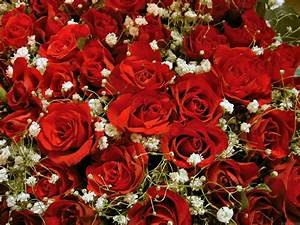 Fleurs Fond D Ecran Les Plus Beau Fond Ecran Fleurs Fond
