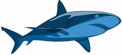 Shark Stingray Clipart Vector Clip Sharks Pure