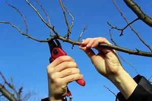Bäume Verschneiden Obstbäume : obstbaumschnitt urban farmer ~ Lizthompson.info Haus und Dekorationen