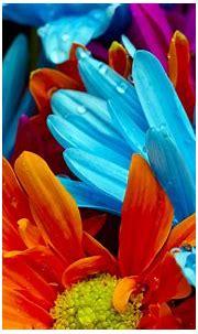 Free download Colorful Flower Hd Desktop Wallpaper HD ...