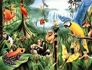 Travel,Nature| Nature and Traveling: Rainforest