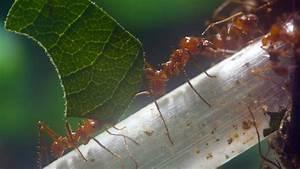Ameisen Im Winter Finden : die chemie macht 39 s ameisen finden ihre toten n ~ Lizthompson.info Haus und Dekorationen