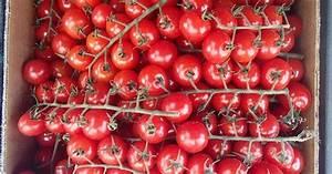 Tomaten In Der Wohnung : die 25 besten ideen zu tomaten z chten auf pinterest ~ Lizthompson.info Haus und Dekorationen