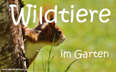 Igel Im Igelhaus  Infos über Igel Und Andere Wildtiere