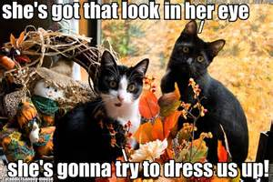 thanksgiving cat and pictures and more fall or thanksgiving cat