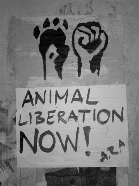 street art animal rights art  mariana cerovecki