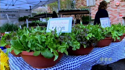 Container Gardening Growing Salad Bowls Youtube