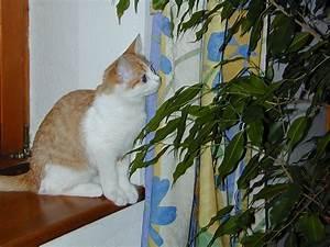 Welche Pflanzen Sind Nicht Giftig Für Katzen : welche pflanzen sind giftig f r katzen ~ Eleganceandgraceweddings.com Haus und Dekorationen