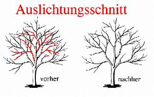 Kirschbaum Richtig Schneiden : baumschnitt ~ Lizthompson.info Haus und Dekorationen