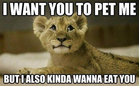 I Want You Memes - funny animal pictures 42 pics