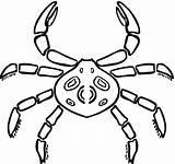 Coloring Crab Spider Pages Printable Hermit Crabs Looks Flash Drawings Games Categories Designlooter Bestcoloringpagesforkids 65kb 1134px 1200 sketch template