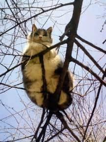 cat in a tree big cat tree animal kingdom