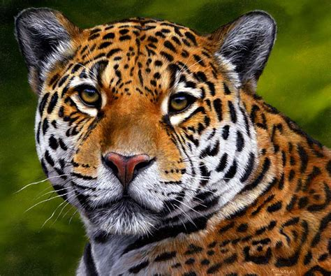 endangered jaguars  stop  persecution