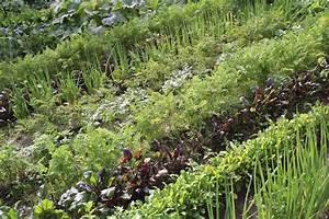 Caroline Bachot Eft : plantation en septembre que planter en septembre 15 id es semer et 50 photos pour se r galer ~ Melissatoandfro.com Idées de Décoration