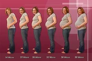 Pregnancy Tips  Blogs  Pregnancy Calendar