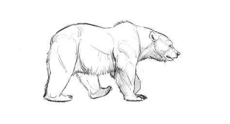 bear walk cycle locomotion     draw bears
