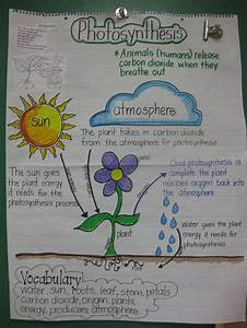 1000  Images About 5th Grade Science On Pinterest