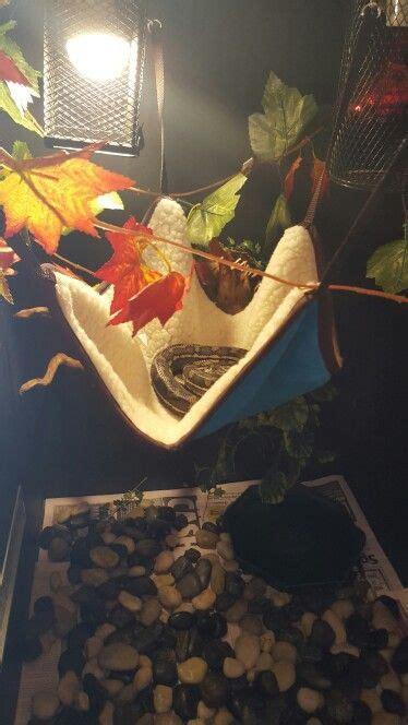 Boa Hammock by Snake Hammock Need To Get Him One Python Ideas