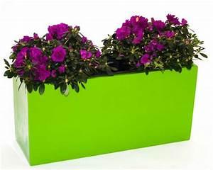 Welche Blumen Blühen Im Winter Draußen : welche blumen f r den pflanzk bel jetzt informieren eleganteinrichten magazin ~ Watch28wear.com Haus und Dekorationen