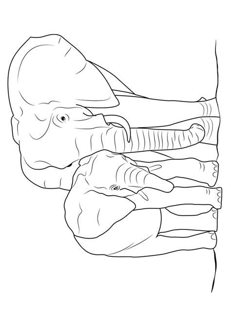 45 Disegni di Elefanti da Colorare | PianetaBambini.it