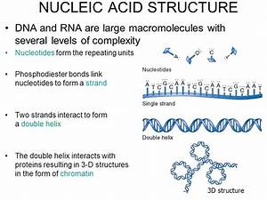 NUCLEIC ACID STRUCTURE - ppt video online download