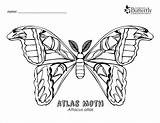 Moth Coloring Atlas Colouring Outline Coloringbay sketch template