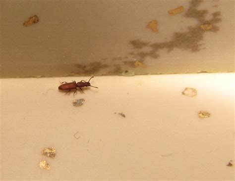 tiny ants in kitchen around sink tiny house bugs house plan 2017