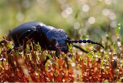 Beetle Wallpapers Drops Bug 1300 1920