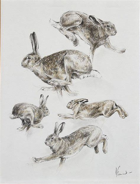 hare hare images  pinterest bunny rabbit