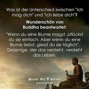 Liebe Ist Wie Eine Blume : 1000 ideen zu buddha zitate auf pinterest ~ Whattoseeinmadrid.com Haus und Dekorationen