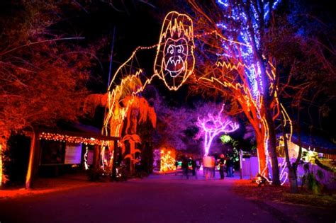 zoolights at the zoo