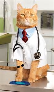 the cat doctor pet vaccinations 101 frequently asked questions about