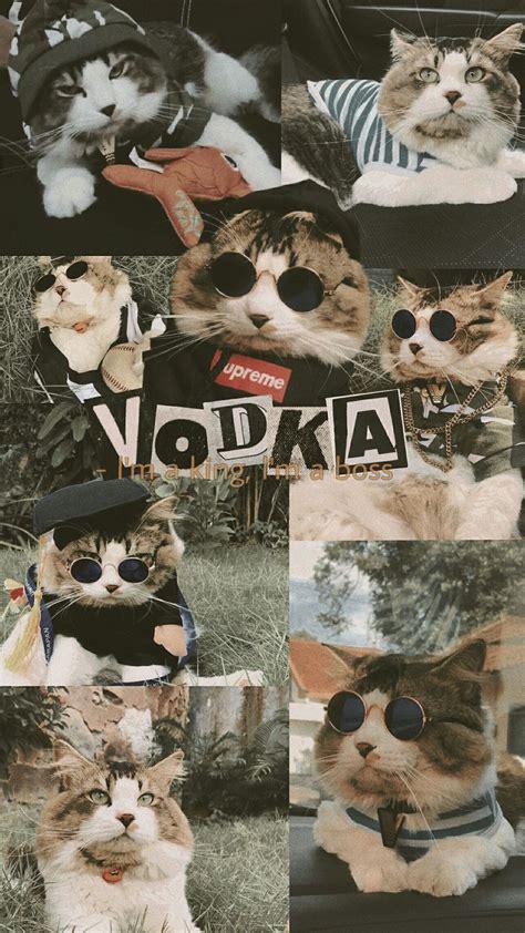 wallpaper cat wallpaper kucing aesthetic