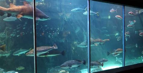 two oceans aquarium at the v a waterfront my cape town