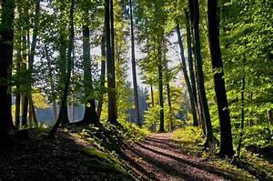 Fototapete Wald Tapeterie