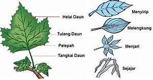 Bagian Tumbuhan Dan Fungsinya