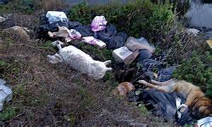 Dozens Of Animal Corpses Found In Italian Lake Dumped By 39mafia Gang Making Millions Supplying
