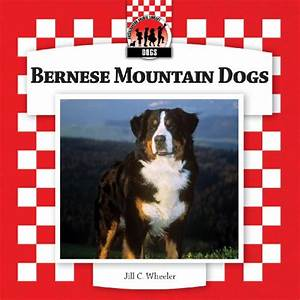 search keyword=bernese mountain dog price&language=english