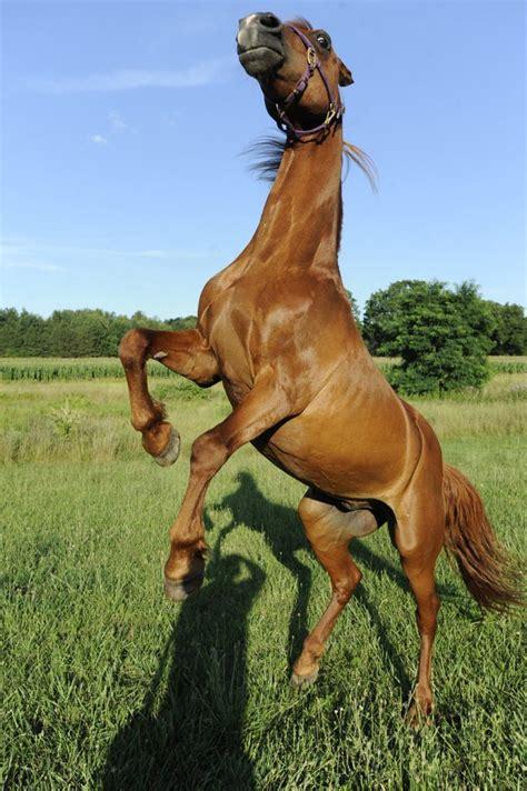 horse frightened supernatural beachcombing english bizarre history