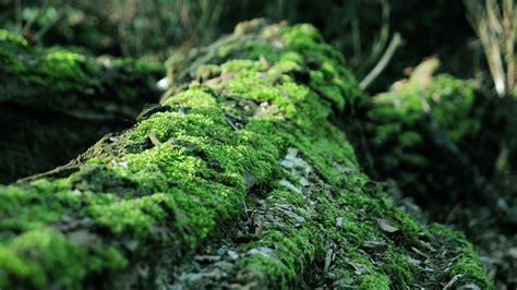 Images Of Moss Tree Blocks Wallpaper 2560x1600 32252