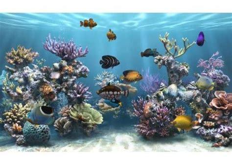poissons exotiques aquarium et fonds marins ecran veille aquarium memes