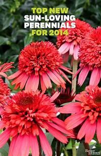 sun loving shrubs Top New Sun-Loving Perennials for 2014 | Outdoor decor ...