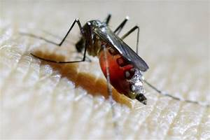 Don't worry about Zika virus - the fear is worse than the ...