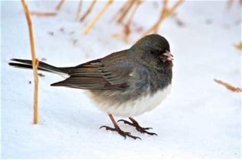 christian begeman winter    birds