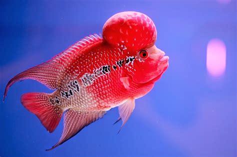รวม 6 ปลาสวยงามที่คนนิยมเลี้ยง ในประเทศไทย   viewsportgame