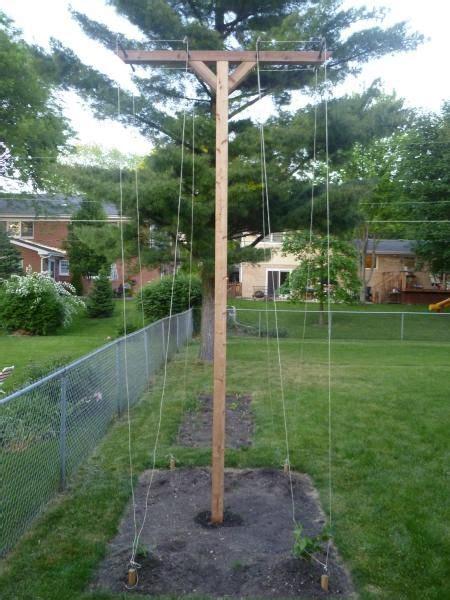 Hops Trellis Design by Growing Hops Gardening Hops Trellis Brew Garden Trellis
