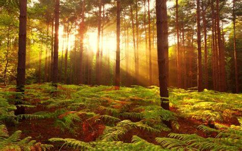 display treesforest love smell autumn hd landscape