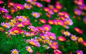 Polana zdjęcia, tapety letnie, zdjęcia kwiatów, charakter ...