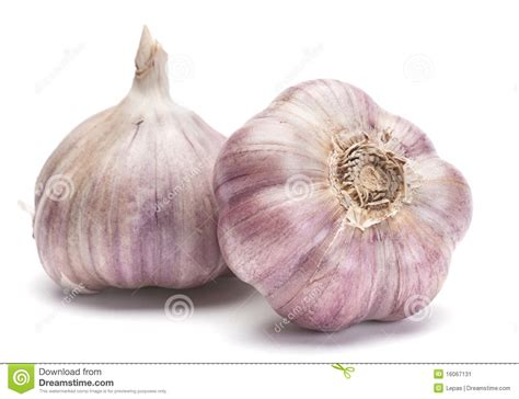 is garlic a vegetable garlic vegetable stock image image 16067131