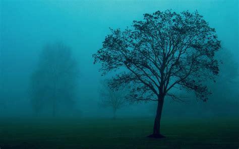wallpapers trees   mist